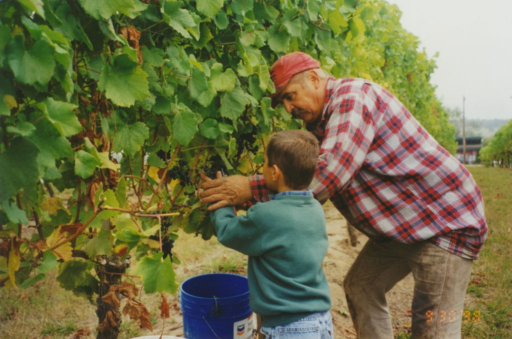 Parker learning to work the vineyard - 1998